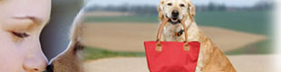 pet friendly restaurants in virginia beach, dog friendly restaurants in virginia beach